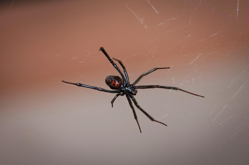 black-widow-spider-2042047_960_720