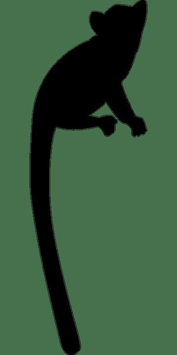 lemur-1394598_960_720