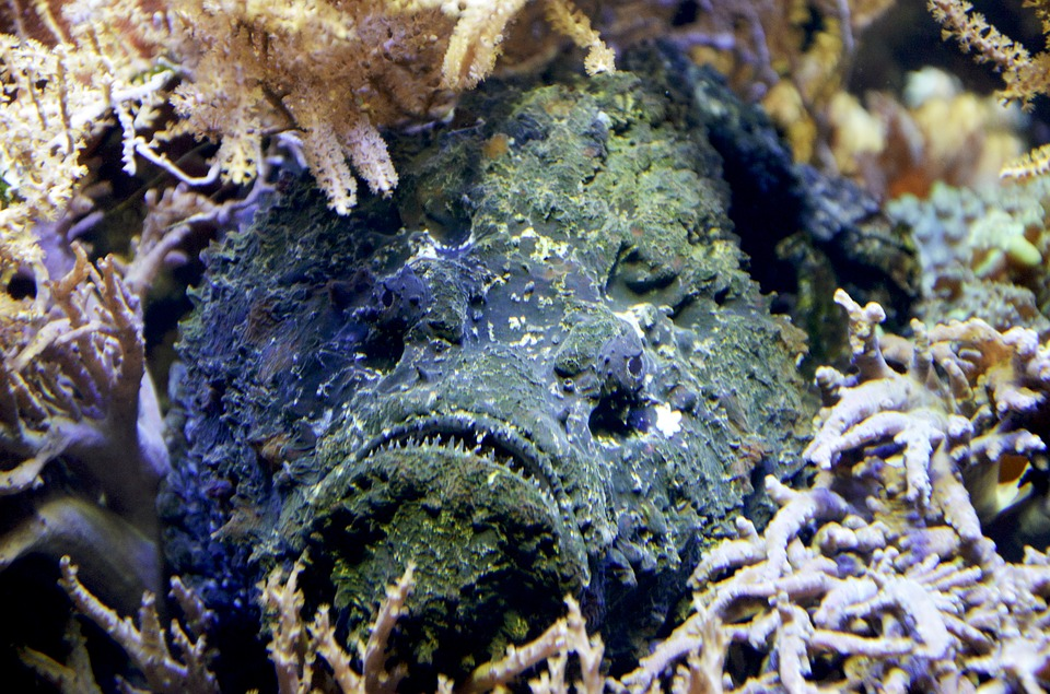 stone-fish-1295032_960_720