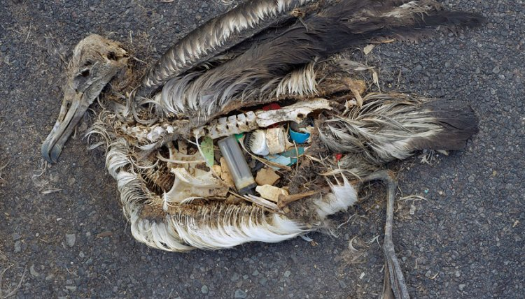 Albatros plastic