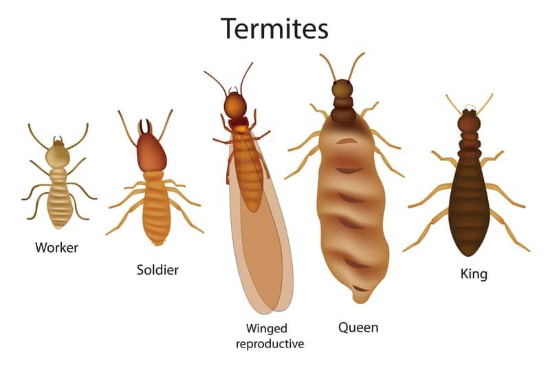 Termite 3