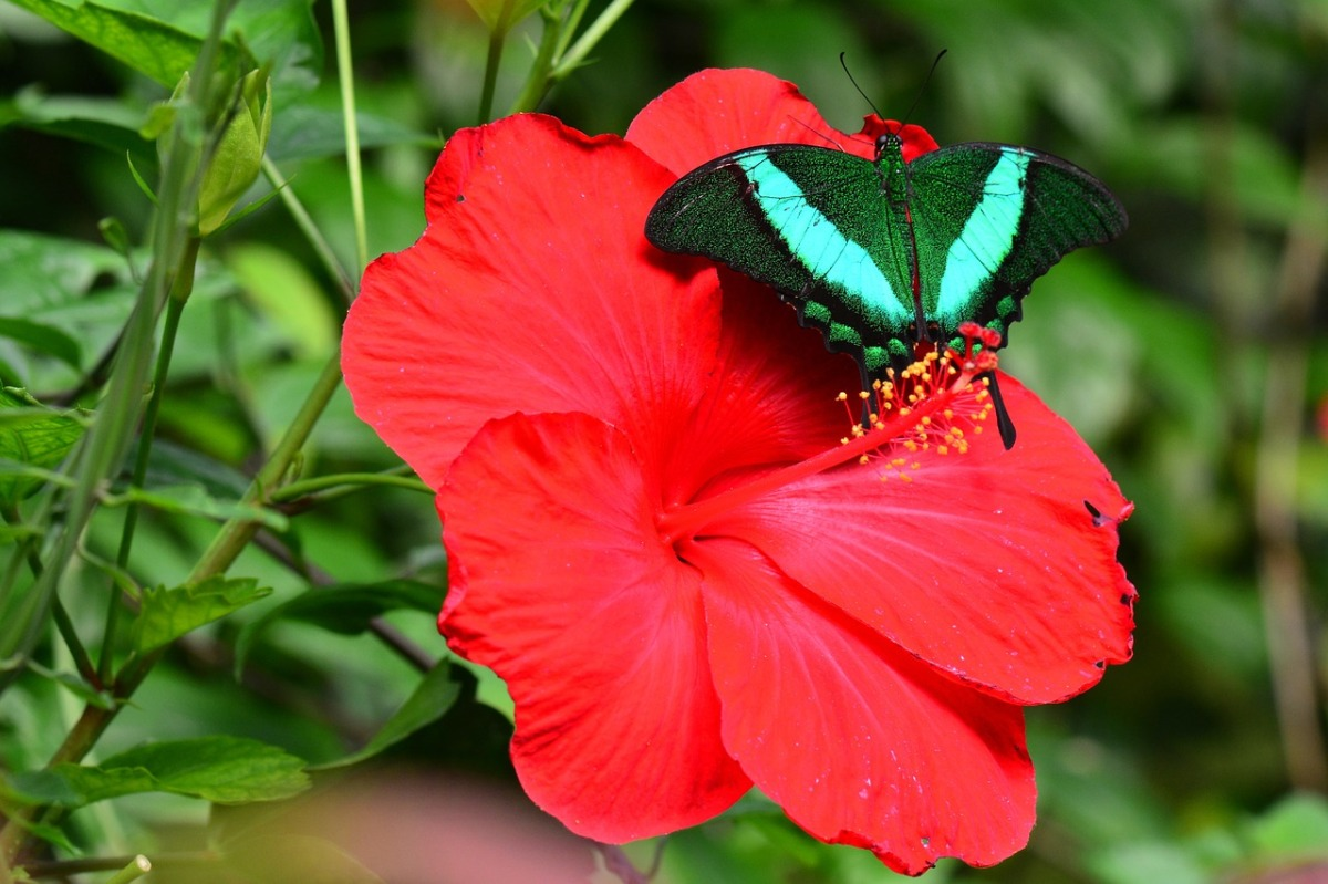 5 Fun Facts About Hibiscus Stories So Wild