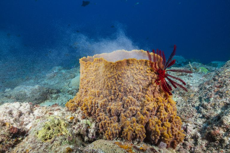 Sea Sponge 3