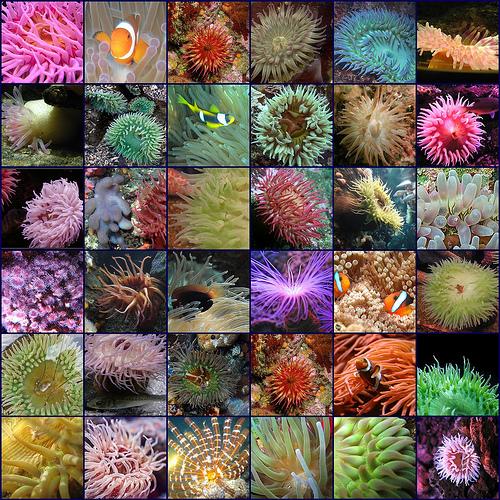 Sea Sponge 4