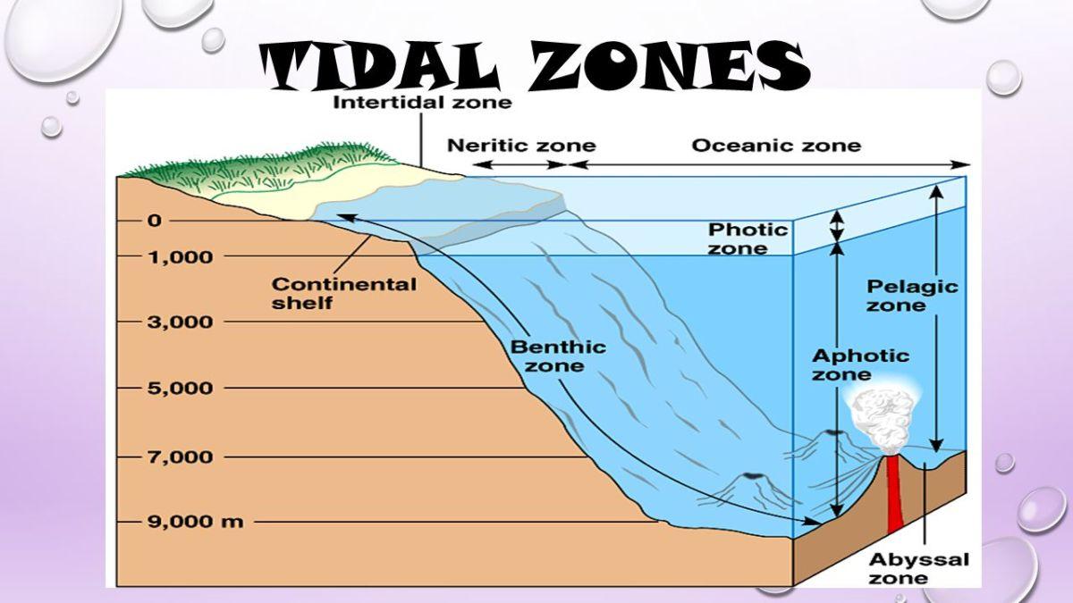 Tidal zones