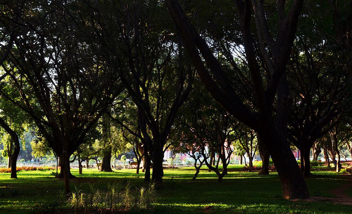 Cubbon Park 4